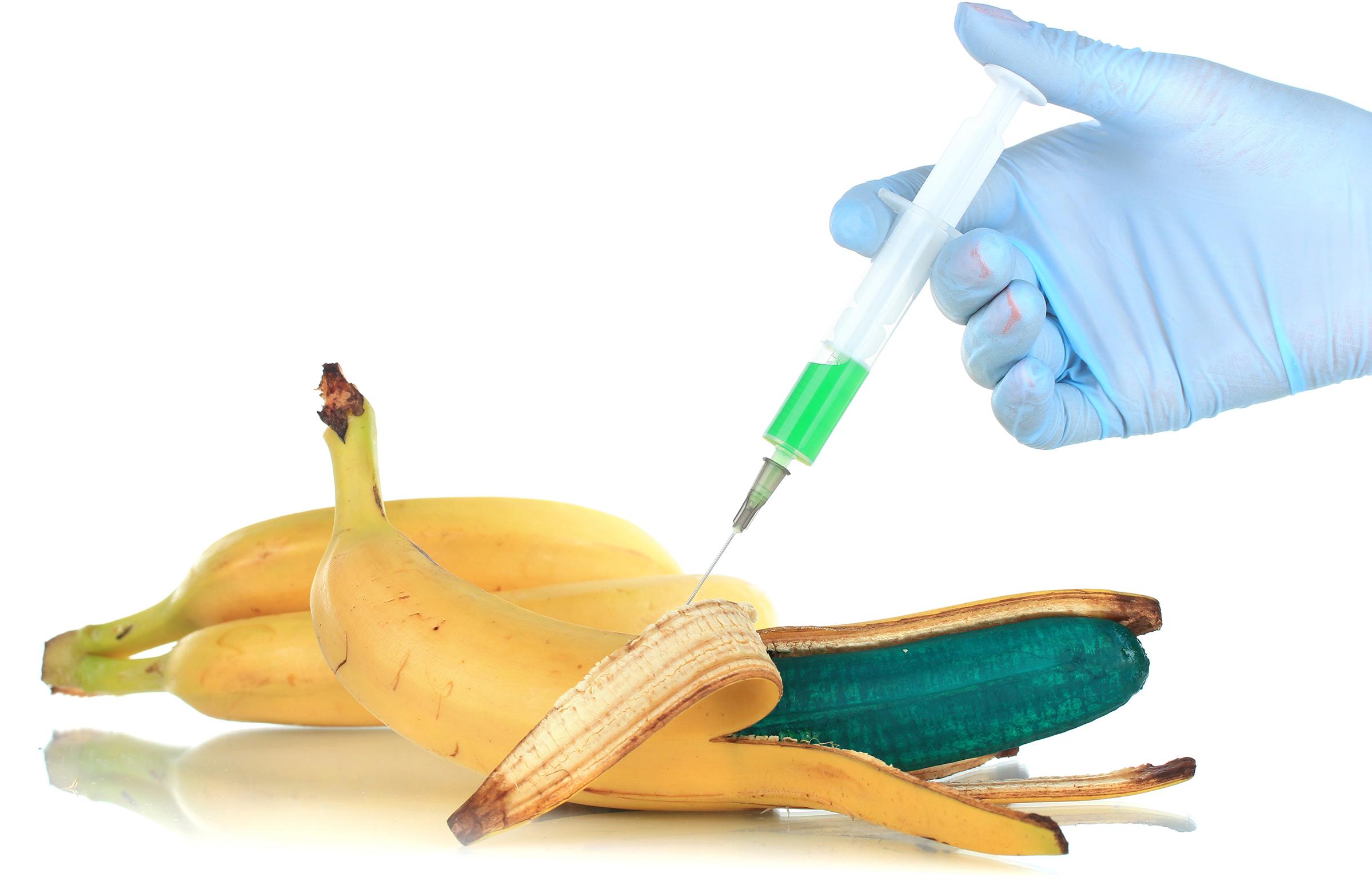 ГЕНЕТСКИ МОДИФИЦИРАНИ ОРГАНИЗМИ (ГМО) – за или против