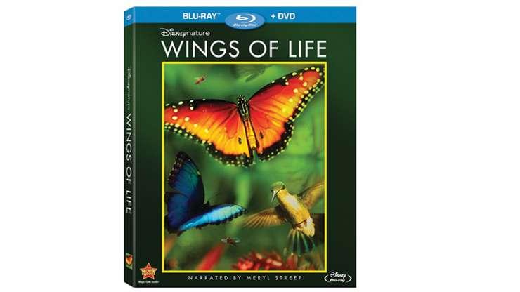 Што во слободно време? – ДОКУМЕНТАРЕН ФИЛМ ЗА ДЕЦА Wings Of Life